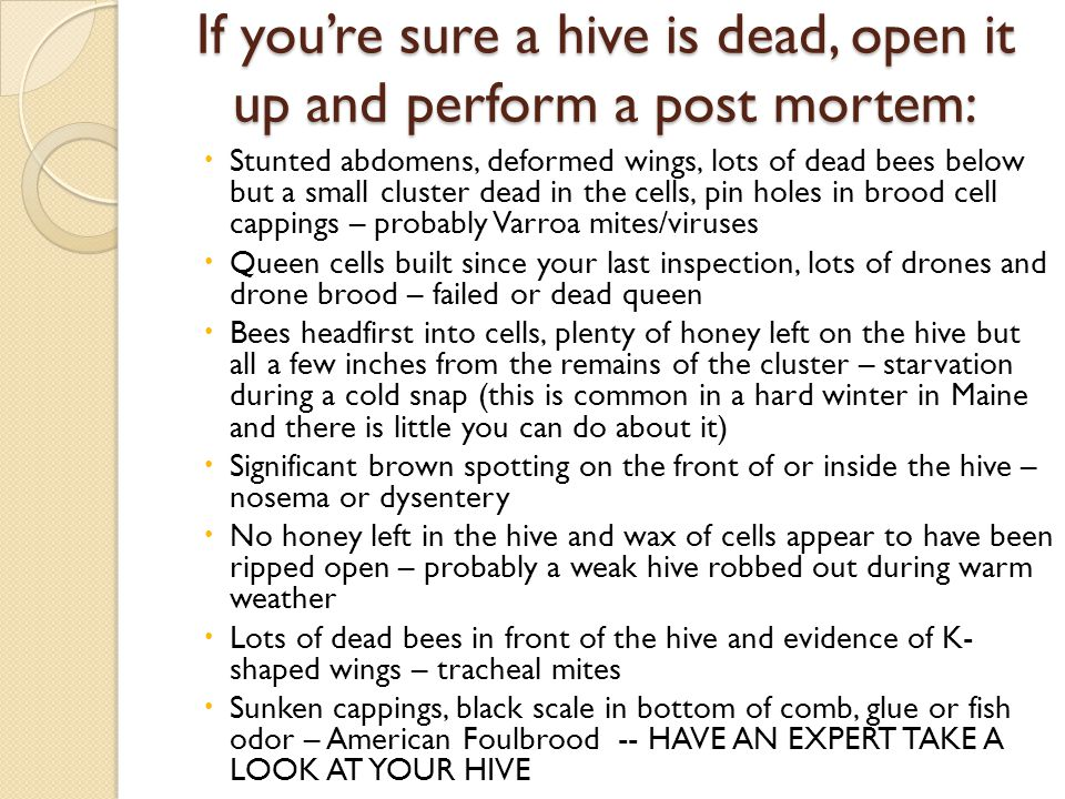 If youre sure a hive is dead, open it up and perform a post mortem: Stunted abdomens, deformed wings, lots of dead bees below but a small cluster dead in the cells, pin holes in brood cell cappings – probably Varroa mites/viruses Queen cells built since your last inspection, lots of drones and drone brood – failed or dead queen Bees headfirst into cells, plenty of honey left on the hive but all a few inches from the remains of the cluster – starvation during a cold snap (this is common in a hard winter in Maine and there is little you can do about it) Significant brown spotting on the front of or inside the hive – nosema or dysentery No honey left in the hive and wax of cells appear to have been ripped open – probably a weak hive robbed out during warm weather Lots of dead bees in front of the hive and evidence of K- shaped wings – tracheal mites Sunken cappings, black scale in bottom of comb, glue or fish odor – American Foulbrood -- HAVE AN EXPERT TAKE A LOOK AT YOUR HIVE