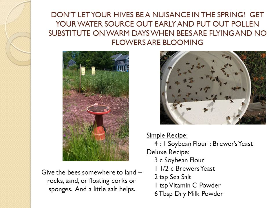 DONT LET YOUR HIVES BE A NUISANCE IN THE SPRING.