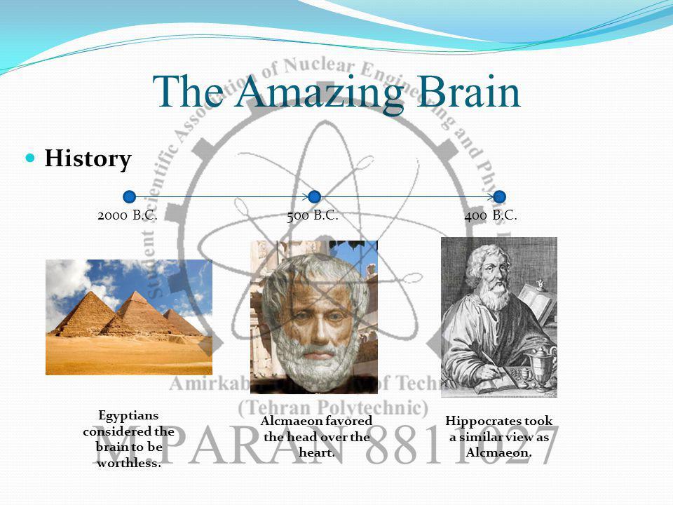 The Amazing Brain History 2000 B.C.500 B.C.400 B.C.