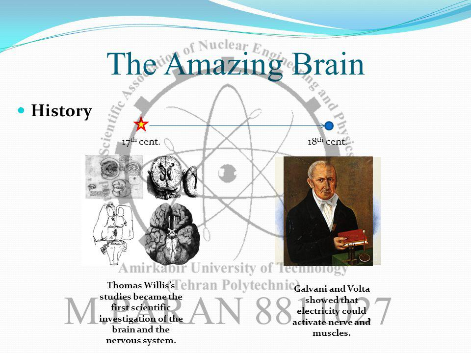 The Amazing Brain History 17 th cent.
