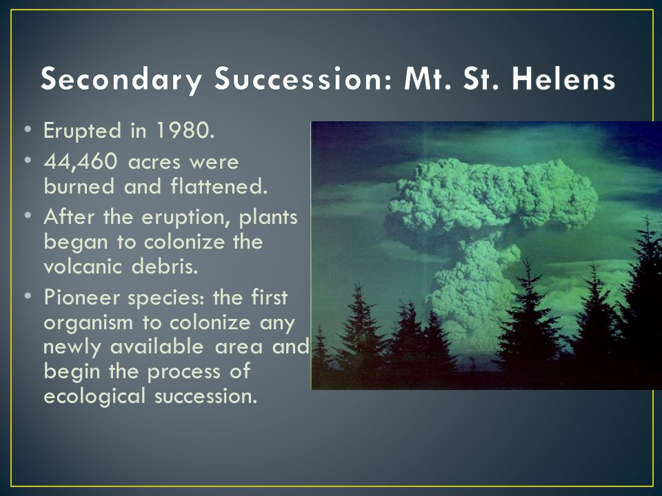 Erupted in 1980.44,460 acres were burned and flattened.