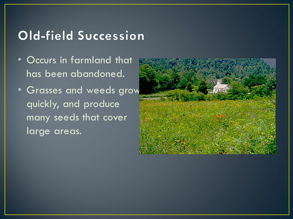 Occurs in farmland that has been abandoned.