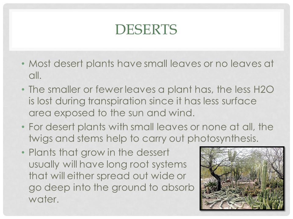 DESERTS Most desert plants have small leaves or no leaves at all. The smaller or fewer leaves a plant has, the less H2O is lost during transpiration s