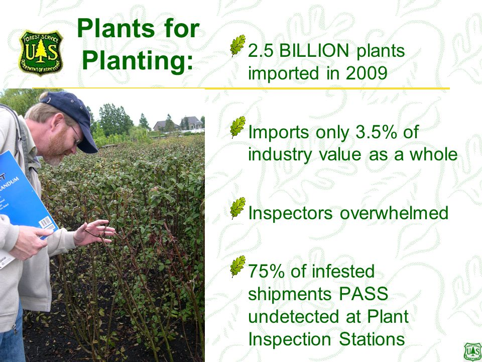 Plants for Planting: 2.5 BILLION plants imported in 2009 Imports only 3.5% of industry value as a whole Inspectors overwhelmed 75% of infested shipments PASS undetected at Plant Inspection Stations