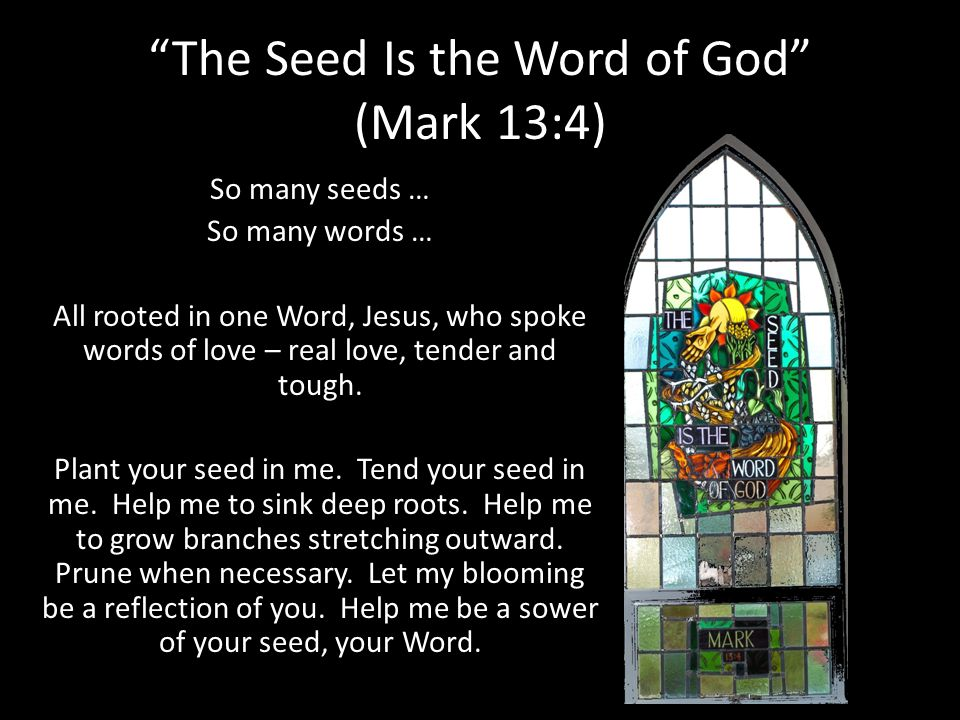 The Seed Is the Word of God (Mark 13:4) So many seeds … So many words … All rooted in one Word, Jesus, who spoke words of love – real love, tender and