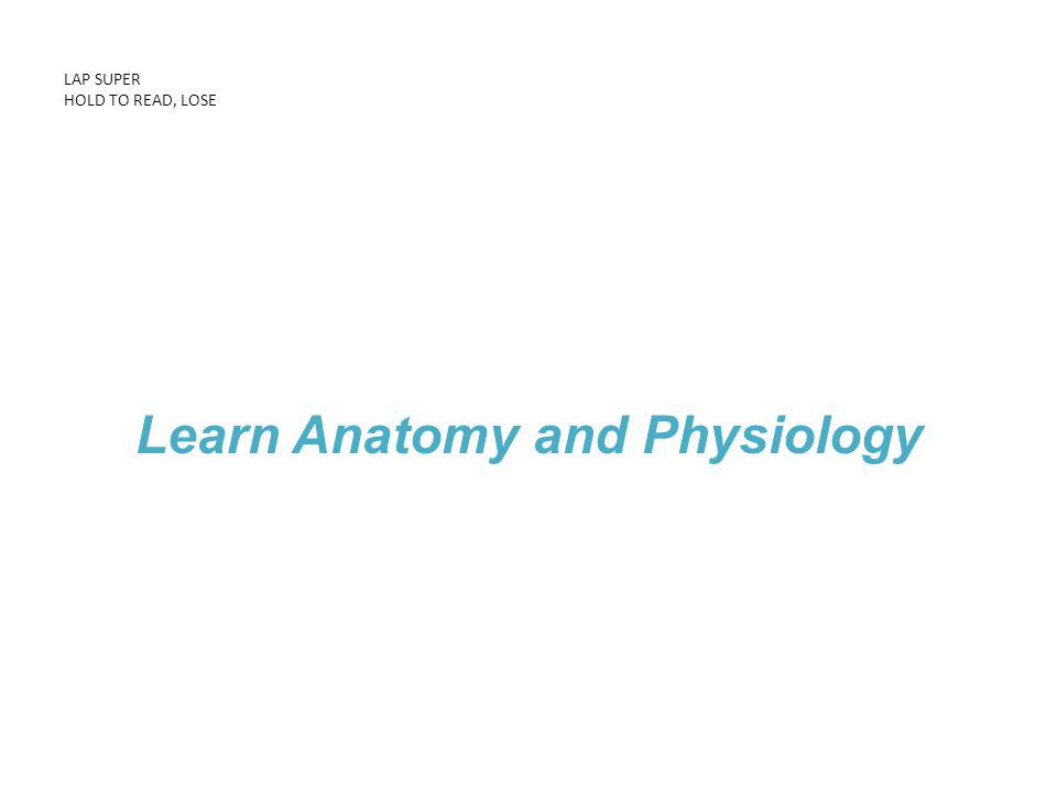 LAP SUPER HOLD TO READ, LOSE Learn Anatomy and Physiology