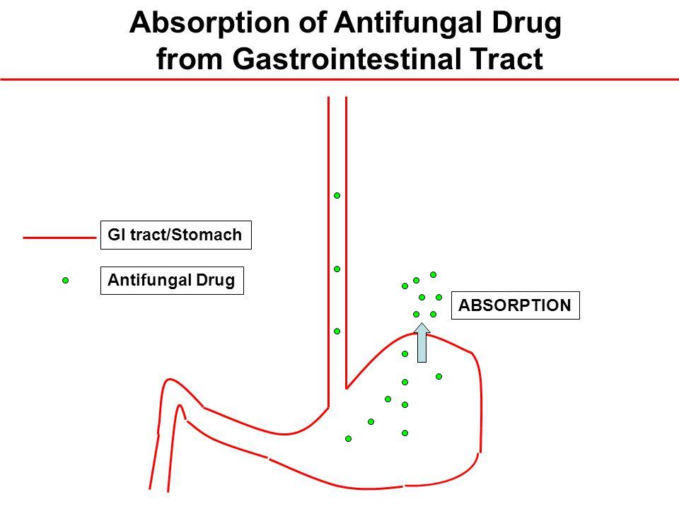 ABSORPTION GI tract/Stomach Antifungal Drug Absorption of Antifungal Drug from Gastrointestinal Tract