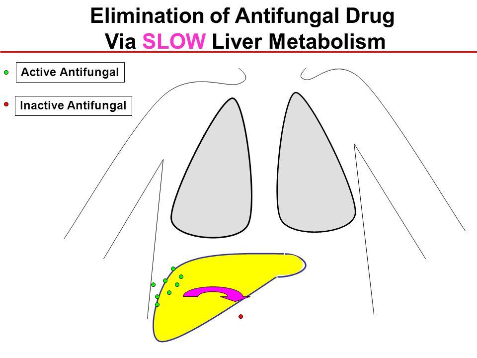 Inactive Antifungal Active Antifungal Elimination of Antifungal Drug Via SLOW Liver Metabolism