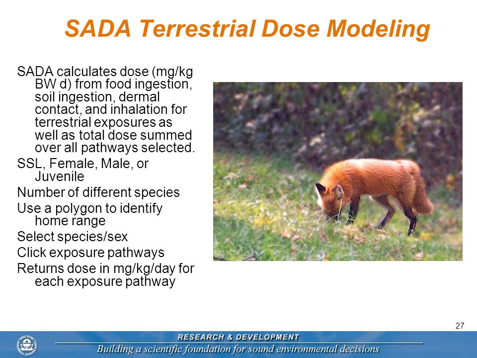 27 SADA Terrestrial Dose Modeling SADA calculates dose (mg/kg BW d) from food ingestion, soil ingestion, dermal contact, and inhalation for terrestrial exposures as well as total dose summed over all pathways selected.