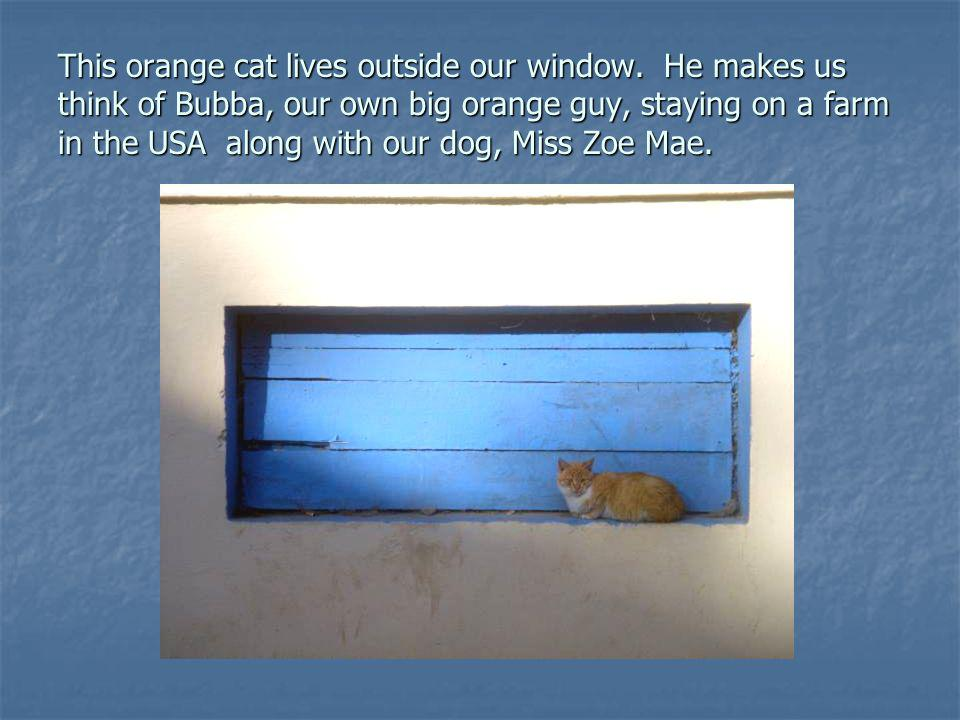 This orange cat lives outside our window.