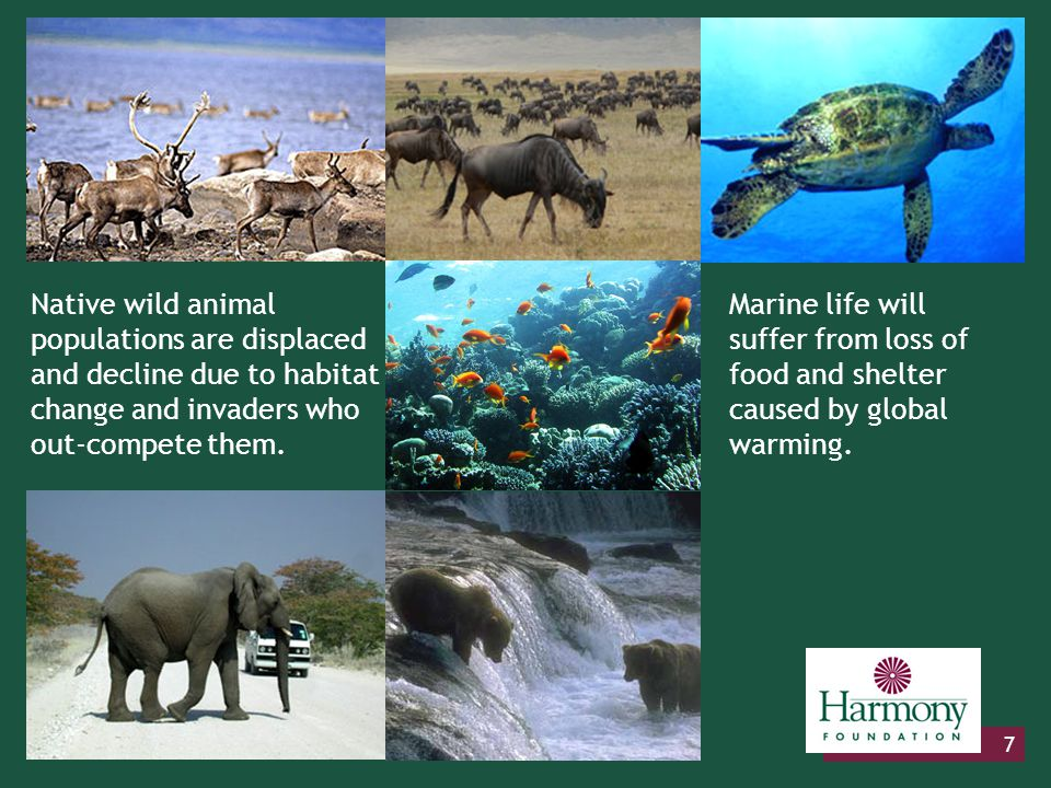 7 Native wild animal populations are displaced and decline due to habitat change and invaders who out-compete them. Marine life will suffer from loss