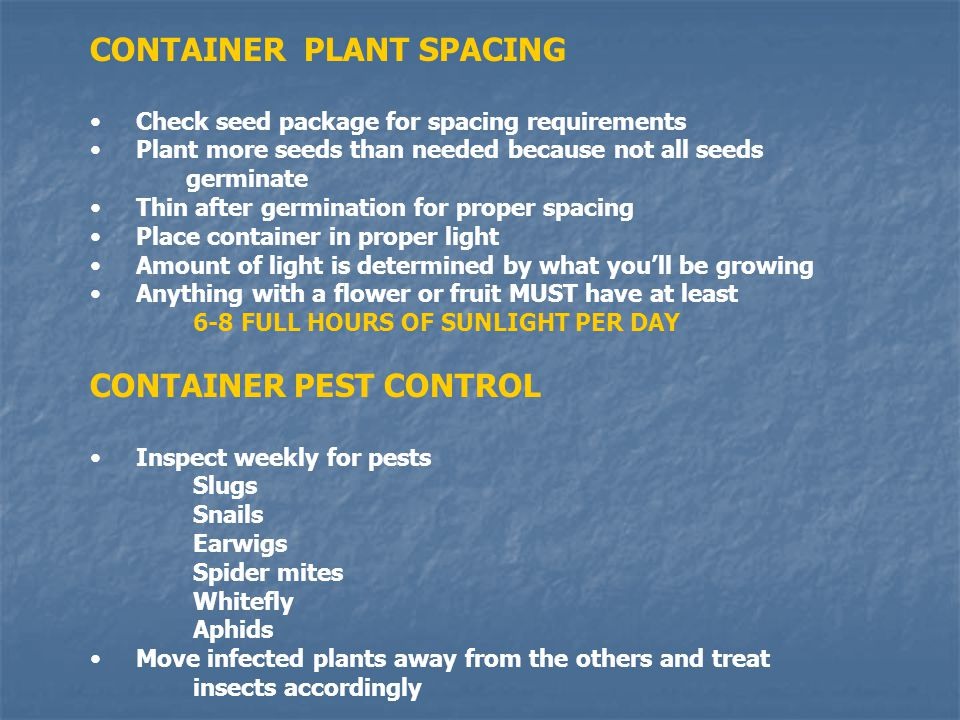 CONTAINER PLANT SPACING Check seed package for spacing requirements Plant more seeds than needed because not all seeds germinate Thin after germination for proper spacing Place container in proper light Amount of light is determined by what youll be growing Anything with a flower or fruit MUST have at least 6-8 FULL HOURS OF SUNLIGHT PER DAY CONTAINER PEST CONTROL Inspect weekly for pests Slugs Snails Earwigs Spider mites Whitefly Aphids Move infected plants away from the others and treat insects accordingly