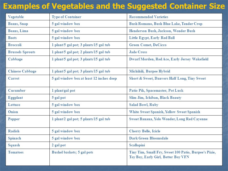 VegetableType of ContainerRecommended Varieties Beans, Snap5 gal window boxBush Romano, Bush Blue Lake, Tender Crop Beans, Lima5 gal window boxHenderson Bush, Jackson, Wonder Bush Beets5 gal window boxLittle Egypt, Early Red Ball Broccoli1 plant/5 gal pot; 3 plants/15 gal tubGreen Comet, DeCicco Brussels Sprouts1 plant/5 gal pot; 2 plants/15 gal tubJade Cross Cabbage1 plant/5 gal pot; 3 plants/15 gal tubDwarf Morden, Red Ace, Early Jersey Wakefield Chinese Cabbage1 plant/5 gal pot; 3 plants/15 gal tubMichihili, Burpee Hybrid Carrot5 gal window box at least 12 inches deepShort & Sweet, Danvers Half Long, Tiny Sweet Cucumber1 plant/gal potPatio Pik, Spacemaster, Pot Luck Eggplant5 gal potSlim Jim, Ichiban, Black Beauty Lettuce5 gal window boxSalad Bowl, Ruby Onion5 gal window boxWhite Sweet Spanish, Yellow Sweet Spanish Pepper1 plant/2 gal pot; 5 plants/15 gal tubSweet Banana, Yolo Wonder, Long Red Cayenne Radish5 gal window boxCherry Belle, Icicle Spinach5 gal window boxDark Green Bloomsdale Squash2 gal potScallopini TomatoesBushel baskets; 5 gal potsTiny Tim, Small Fry, Sweet 100 Patio, Burpee s Pixie, Toy Boy, Early Girl, Better Boy VFN Examples of Vegetables and the Suggested Container Size