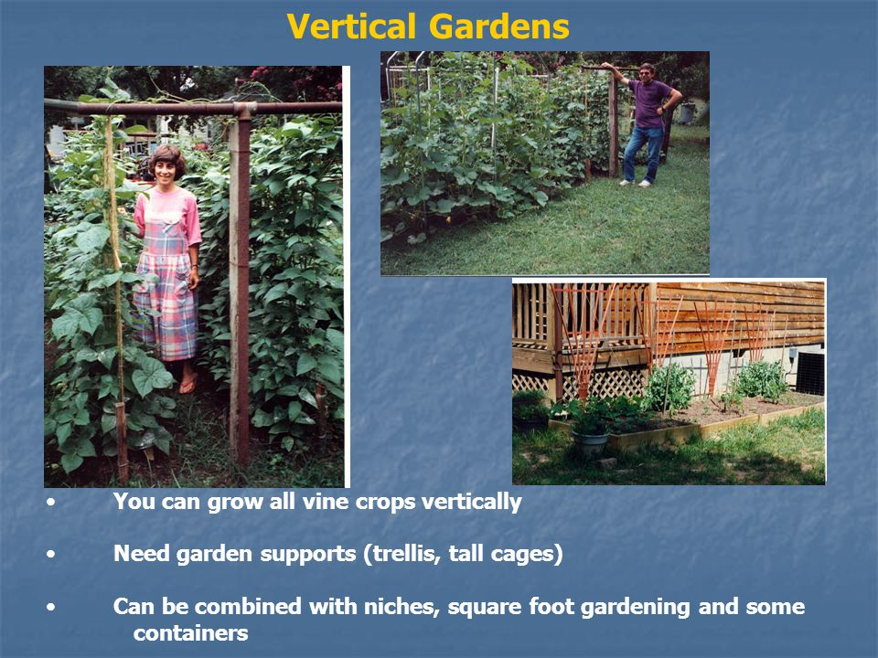 Vertical Gardens You can grow all vine crops vertically Need garden supports (trellis, tall cages) Can be combined with niches, square foot gardening and some containers
