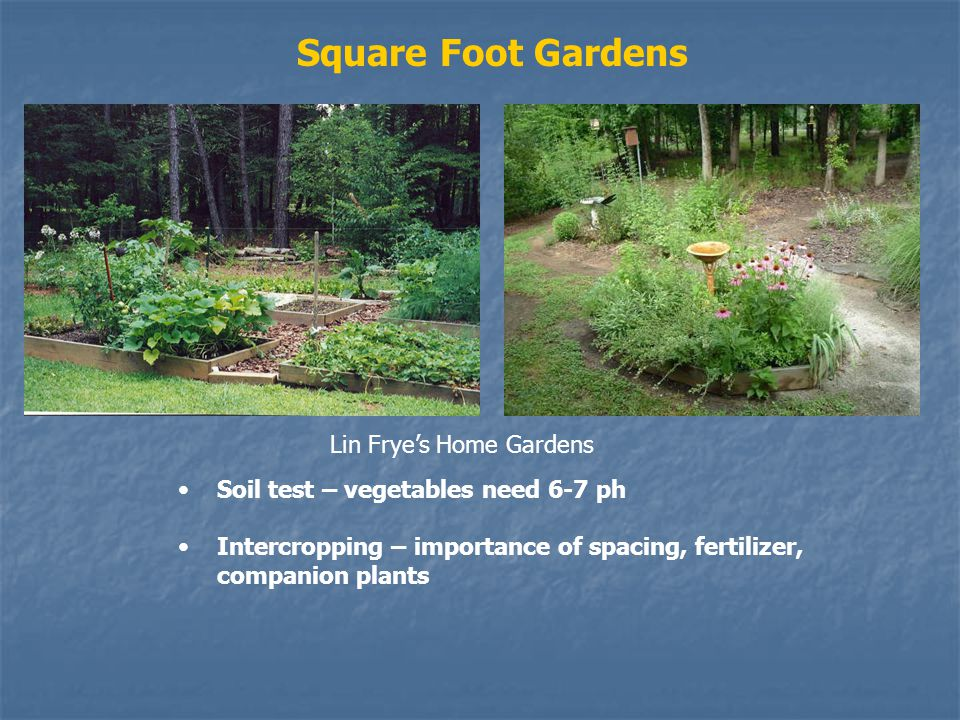 Square Foot Gardens Soil test – vegetables need 6-7 ph Intercropping – importance of spacing, fertilizer, companion plants Lin Fryes Home Gardens