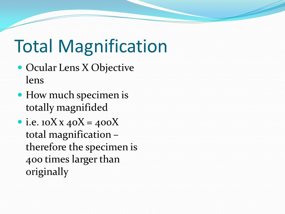 Total Magnification Ocular Lens X Objective lens How much specimen is totally magnifided i.e. 10X x 40X = 400X total magnification – therefore the spe
