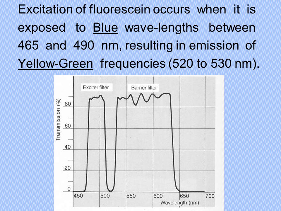 Excitation of fluorescein occurs when it is exposed to Blue wave-lengths between 465 and 490 nm, resulting in emission of Yellow-Green frequencies (52
