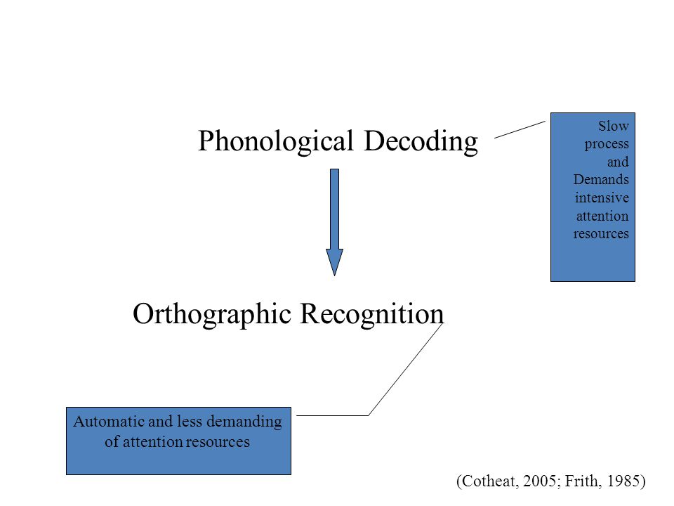 Phonological Decoding Orthographic Recognition Slow process and Demands intensive attention resources Automatic and less demanding of attention resour