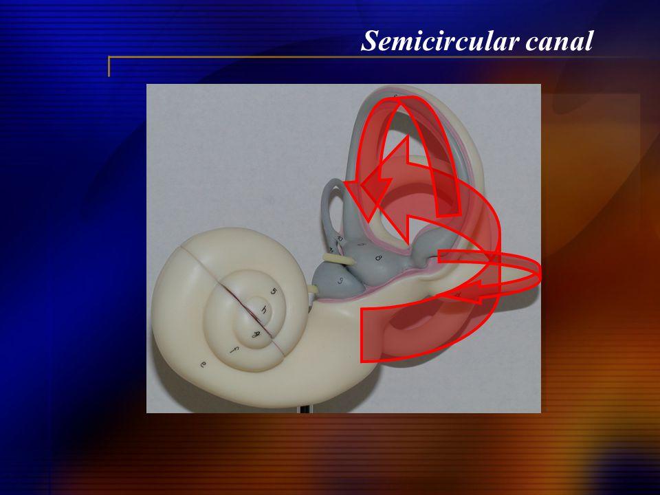 Semicircular canal