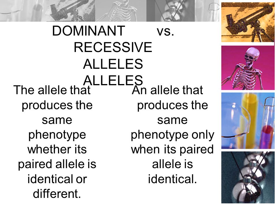 DOMINANT vs. RECESSIVE ALLELES ALLELES The allele that produces the same phenotype whether its paired allele is identical or different. An allele that