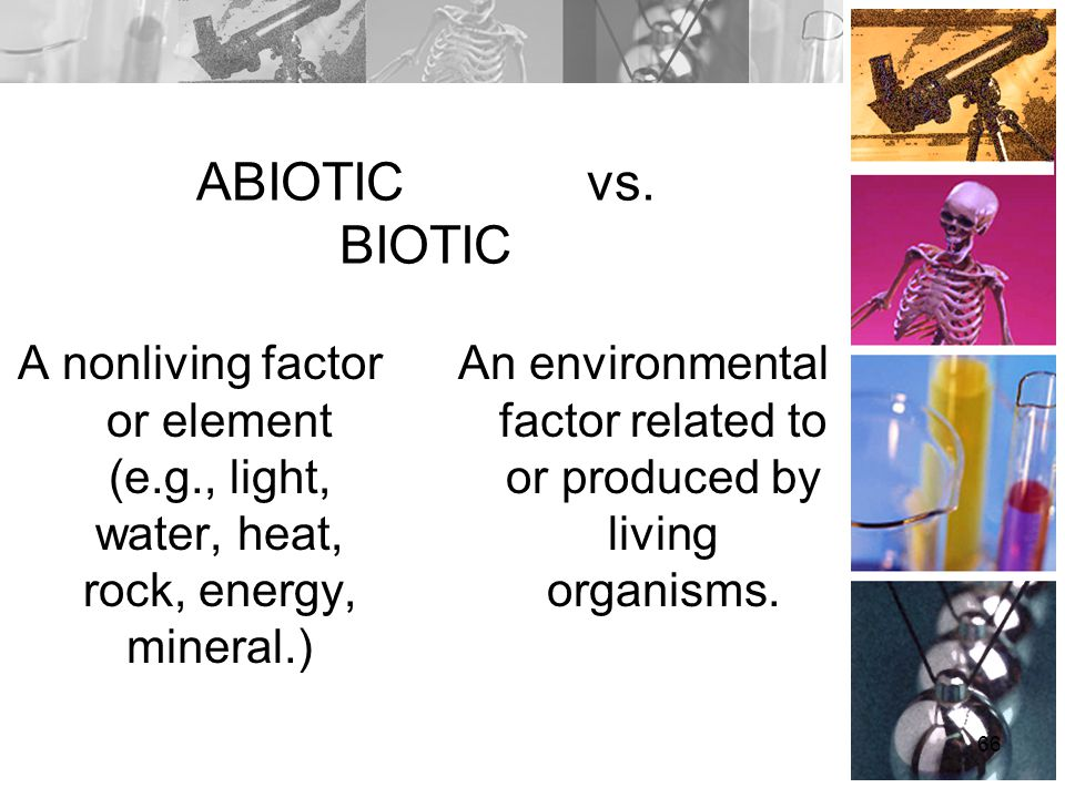 ABIOTIC vs. BIOTIC A nonliving factor or element (e.g., light, water, heat, rock, energy, mineral.) An environmental factor related to or produced by