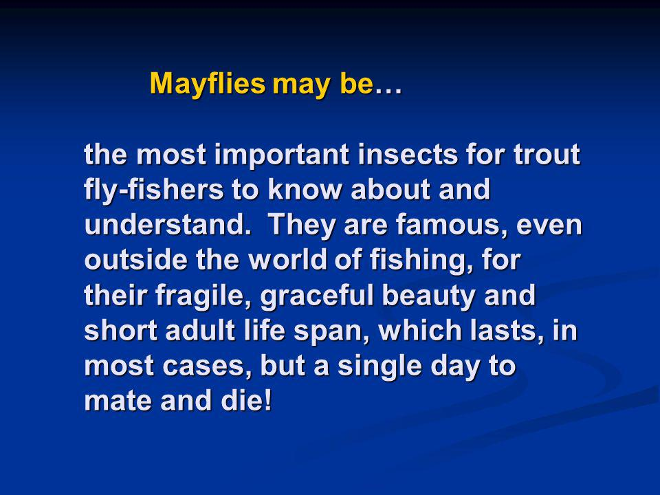 Mayflies may be… the most important insects for trout fly-fishers to know about and understand. They are famous, even outside the world of fishing, fo