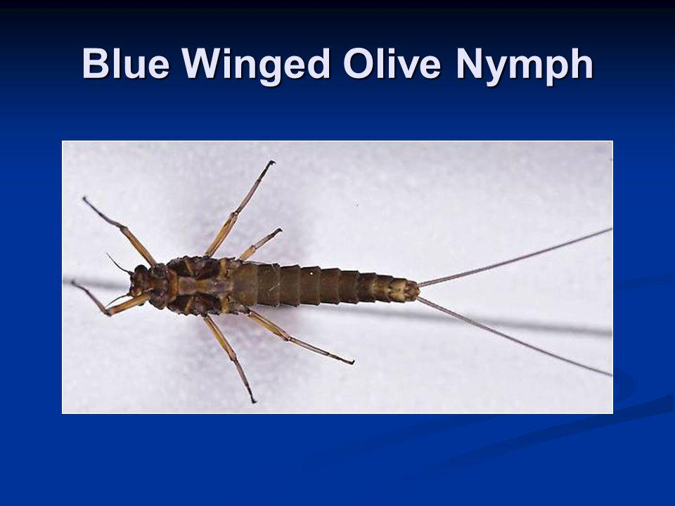 Blue Winged Olive Nymph