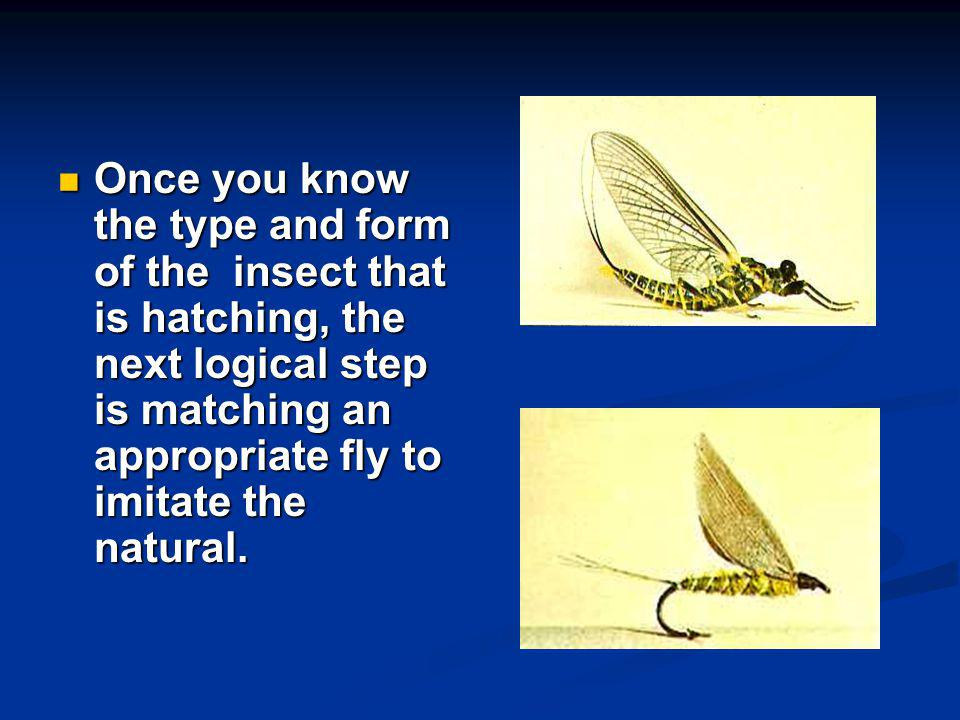 Once you know the type and form of the insect that is hatching, the next logical step is matching an appropriate fly to imitate the natural.