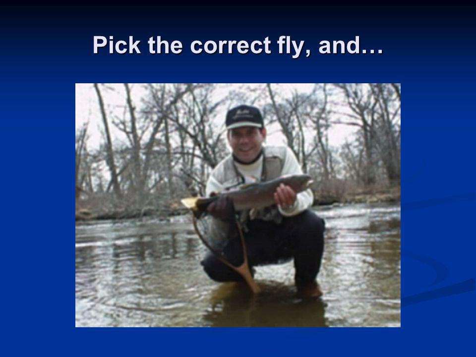 Pick the correct fly, and…