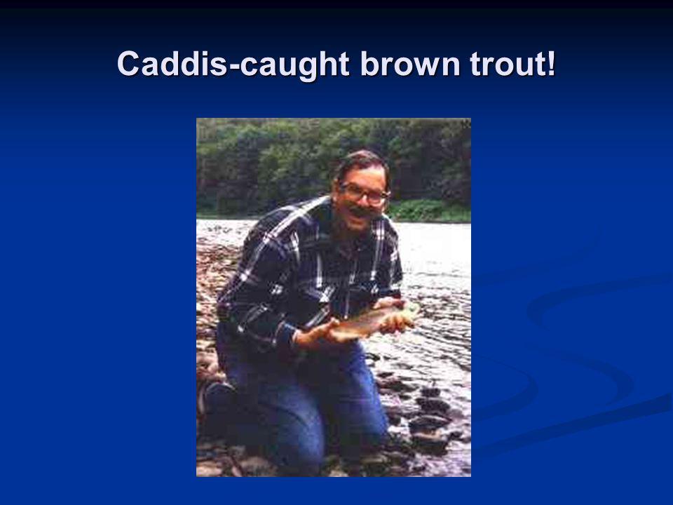 Caddis-caught brown trout!