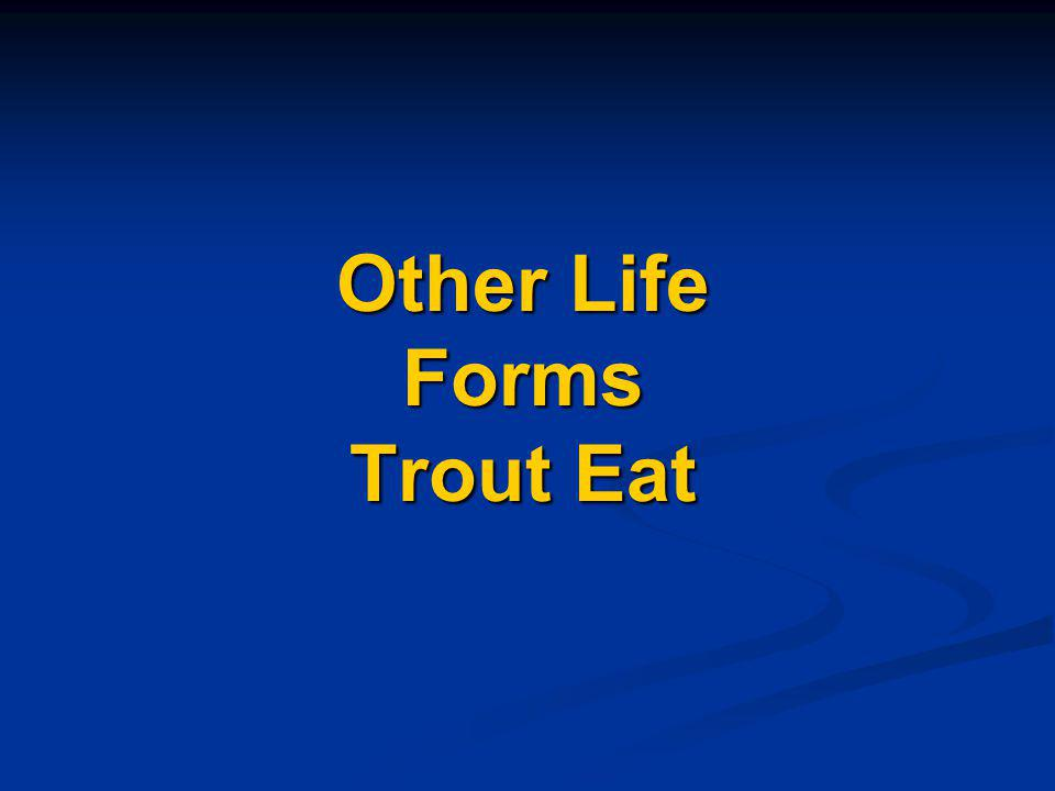 Other Life Forms Trout Eat