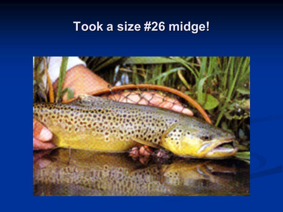 Took a size #26 midge!