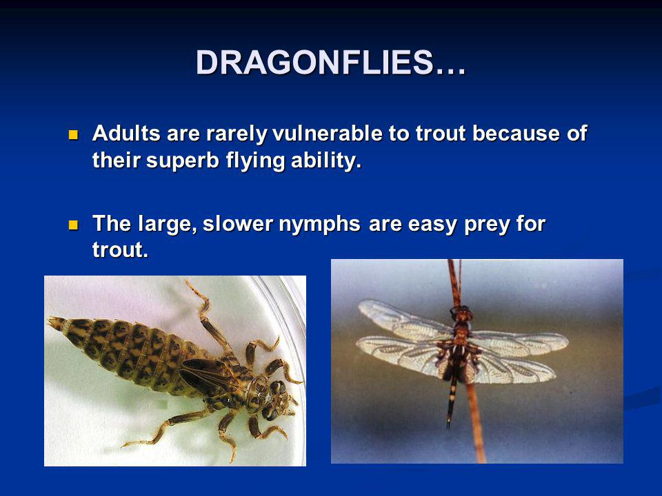 DRAGONFLIES… Adults are rarely vulnerable to trout because of their superb flying ability.