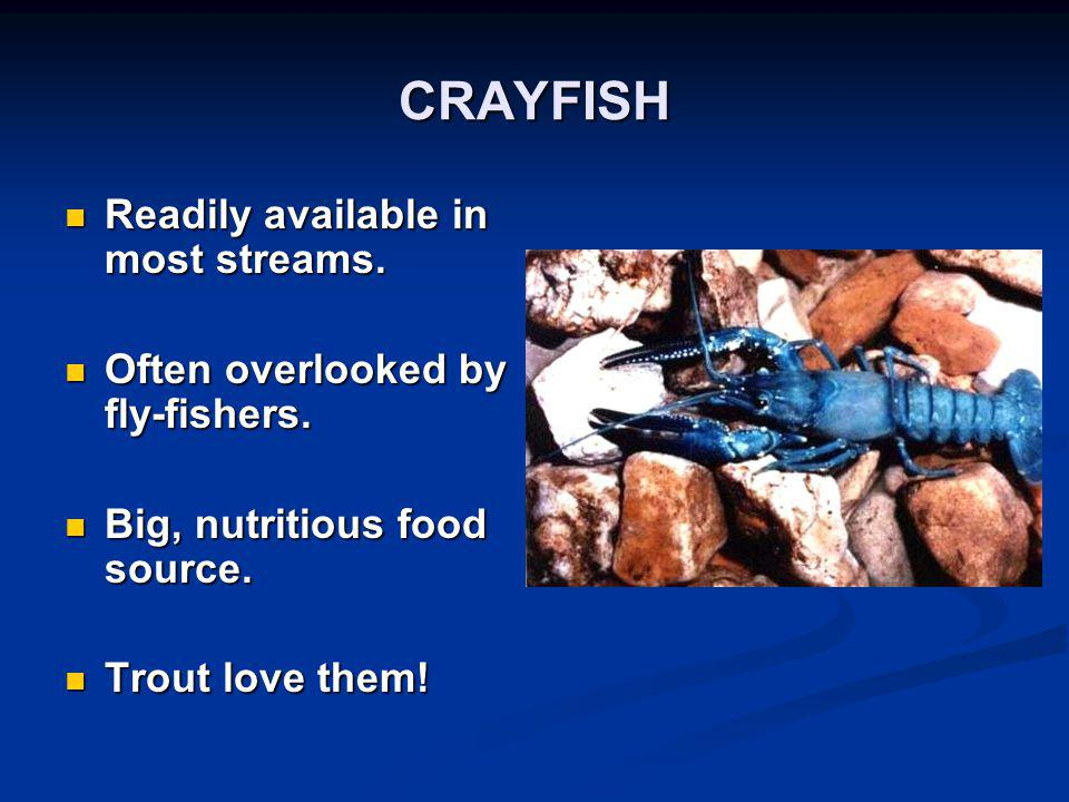CRAYFISH Readily available in most streams. Readily available in most streams. Often overlooked by fly-fishers. Often overlooked by fly-fishers. Big,