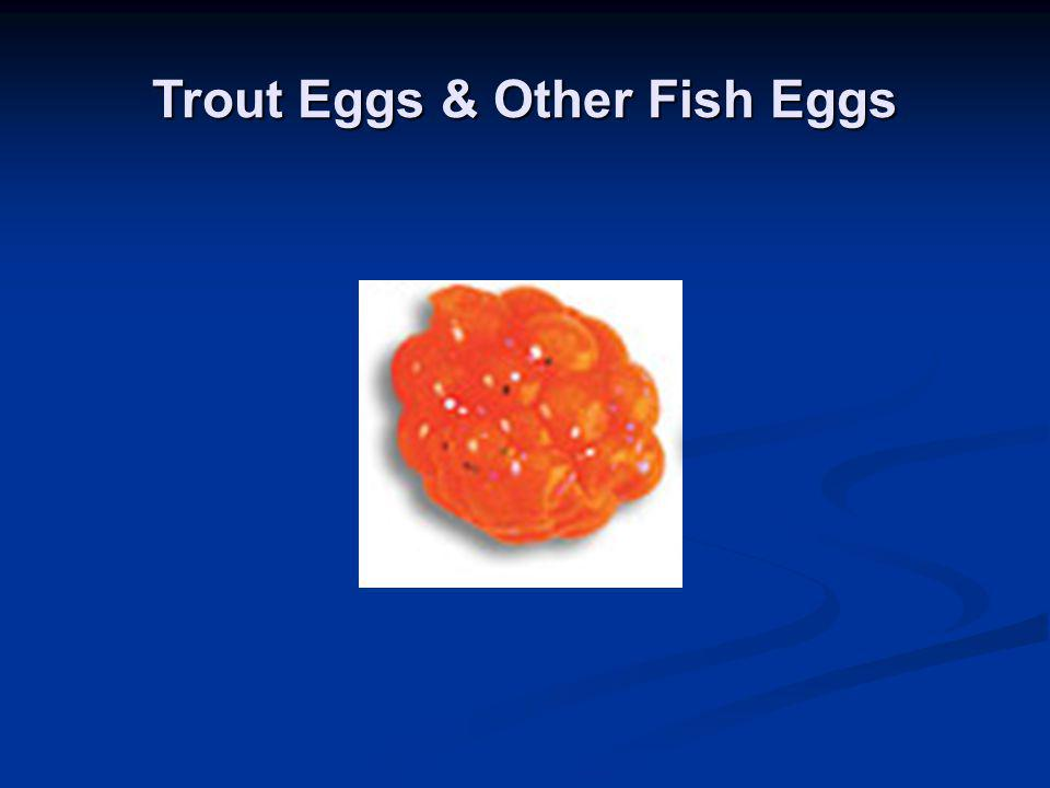 Trout Eggs & Other Fish Eggs