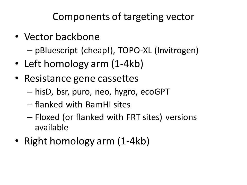 * Sal 3.7 kb4.6 kb 0.8 kb probe Sac encoding the critical domain term No NotI and BamHI in the genomic region (at least in the database) Sal BB NotI bsr Sac B B pBluescript Sal NotI