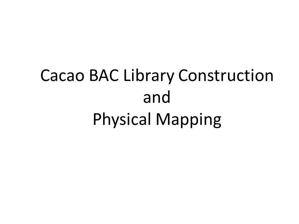 Cacao BAC Library Construction and Physical Mapping