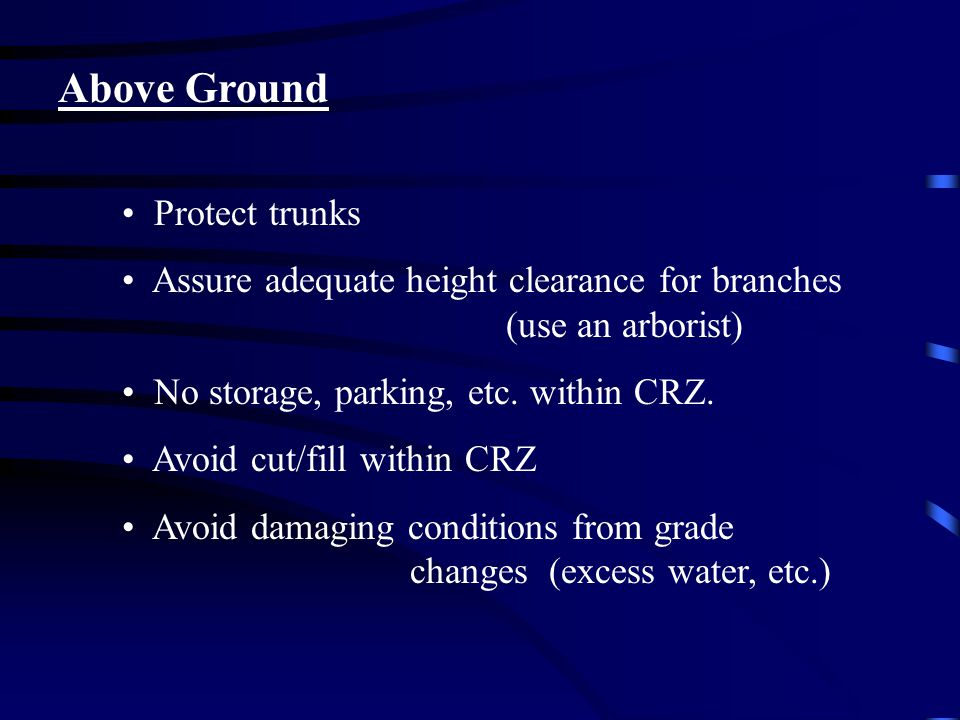 Above Ground Protect trunks Assure adequate height clearance for branches (use an arborist) No storage, parking, etc.