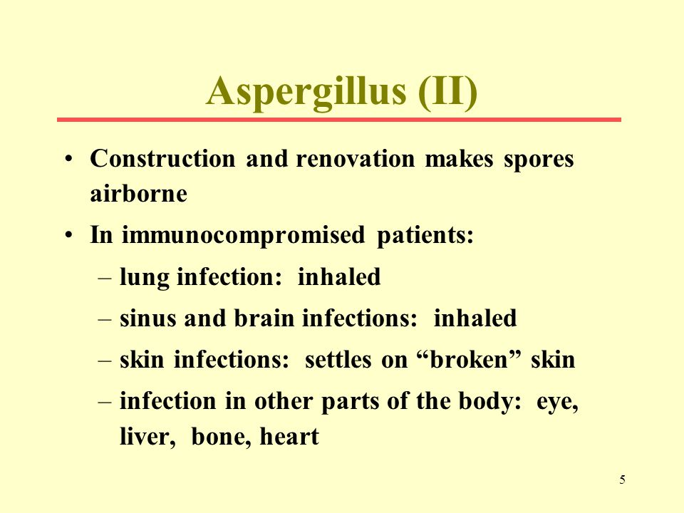 5 Aspergillus (II) Construction and renovation makes spores airborne In immunocompromised patients: –lung infection: inhaled –sinus and brain infections: inhaled –skin infections: settles on broken skin –infection in other parts of the body: eye, liver, bone, heart