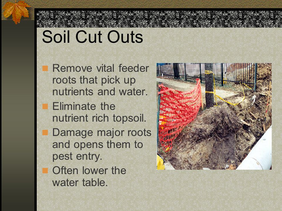 Soil Cut Outs Remove vital feeder roots that pick up nutrients and water. Eliminate the nutrient rich topsoil. Damage major roots and opens them to pe