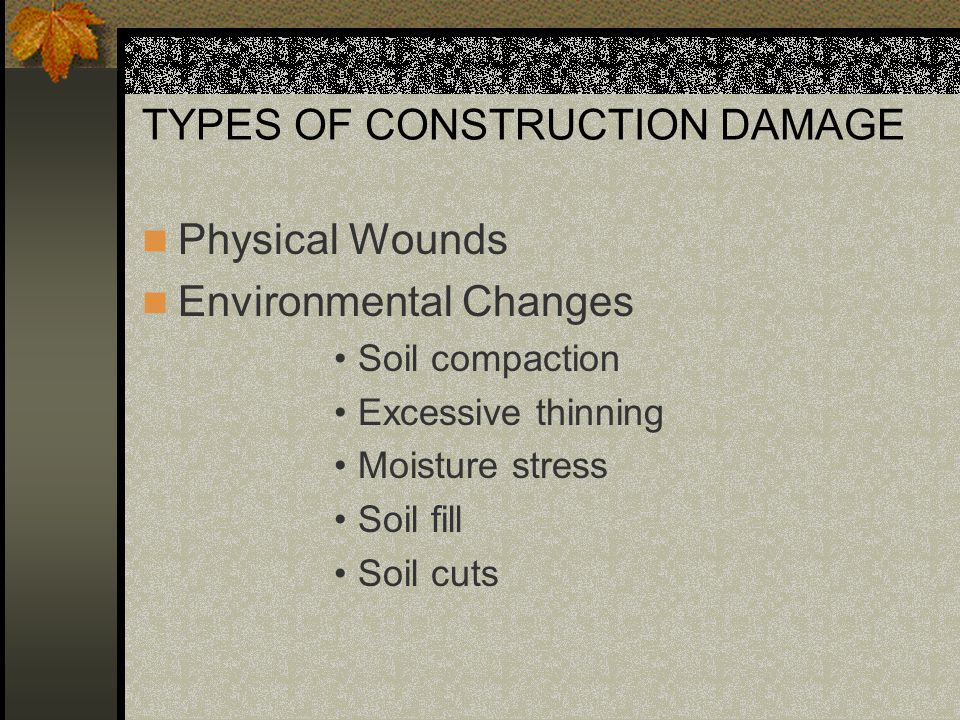 TYPES OF CONSTRUCTION DAMAGE Physical Wounds Environmental Changes Soil compaction Excessive thinning Moisture stress Soil fill Soil cuts