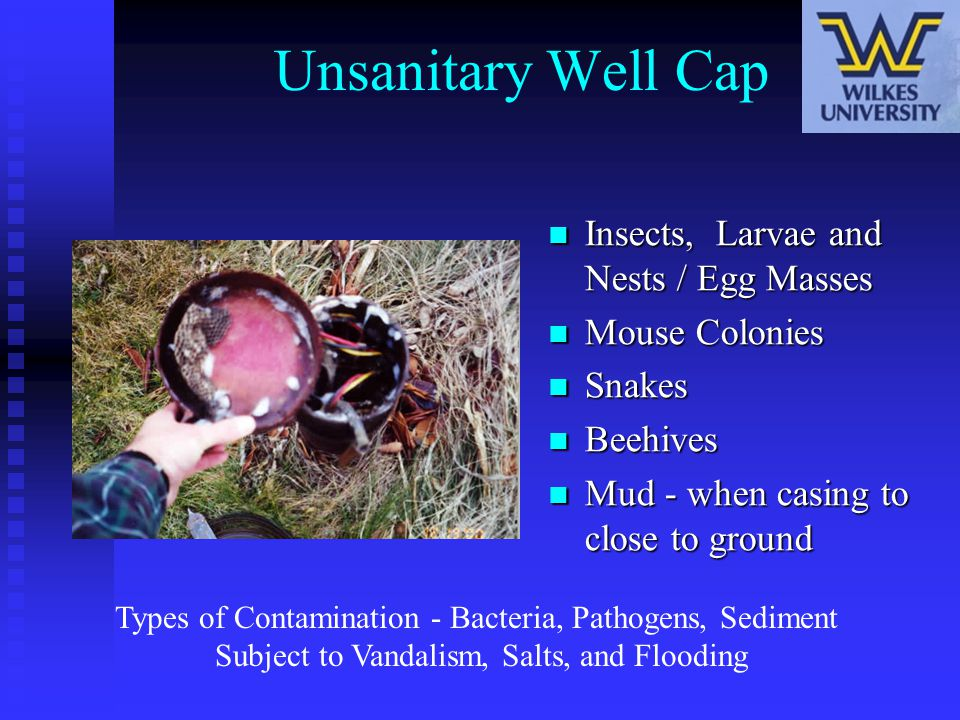 Unsanitary Well Cap Insects, Larvae and Nests / Egg Masses Mouse Colonies Snakes Beehives Mud - when casing to close to ground Types of Contamination