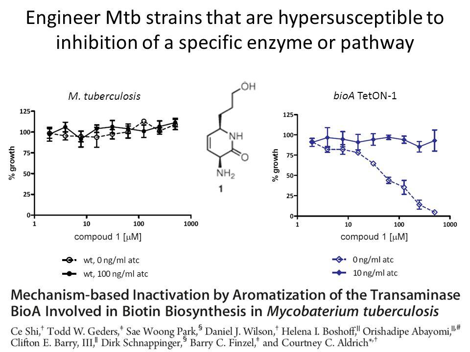 M. tuberculosis bioA TetON-1