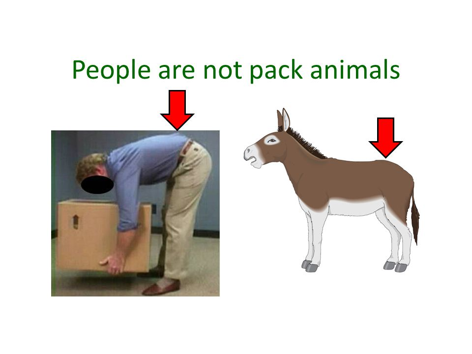 People are not pack animals