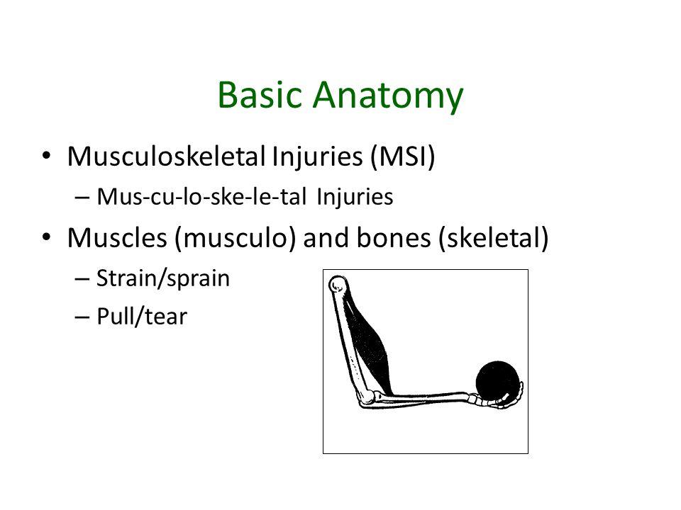 Basic Anatomy Musculoskeletal Injuries (MSI) – Mus-cu-lo-ske-le-tal Injuries Muscles (musculo) and bones (skeletal) – Strain/sprain – Pull/tear