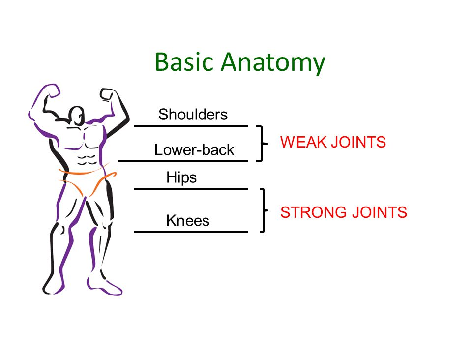 Basic Anatomy Shoulders Lower-back Hips WEAK JOINTS STRONG JOINTS Knees