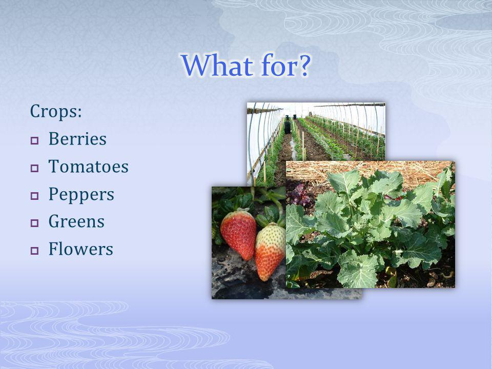 Crops: Berries Tomatoes Peppers Greens Flowers