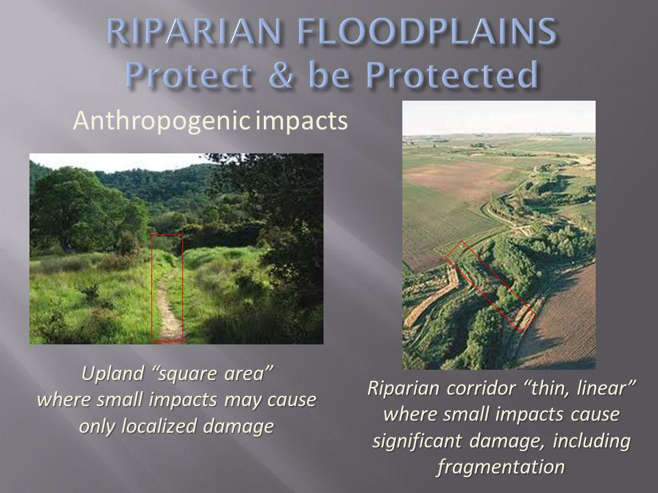 Anthropogenic impacts Upland square area where small impacts may cause only localized damage Riparian corridor thin, linear where small impacts cause significant damage, including fragmentation