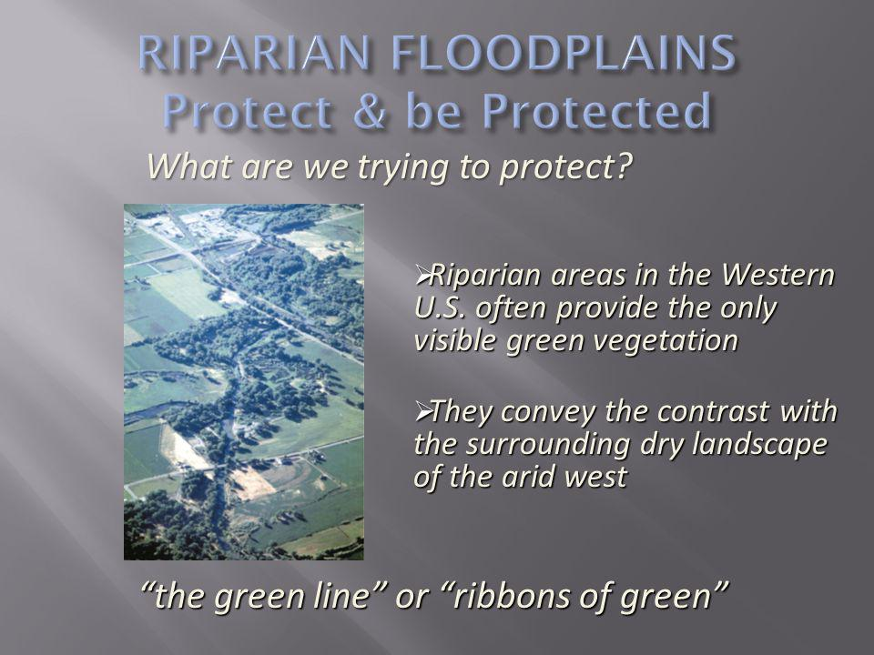Riparian areas comprise less than one percent of the land area of most western states, yet up to 80 percent of all wildlife species in this region of the country are dependent upon riparian areas for at least part of their life cycles.