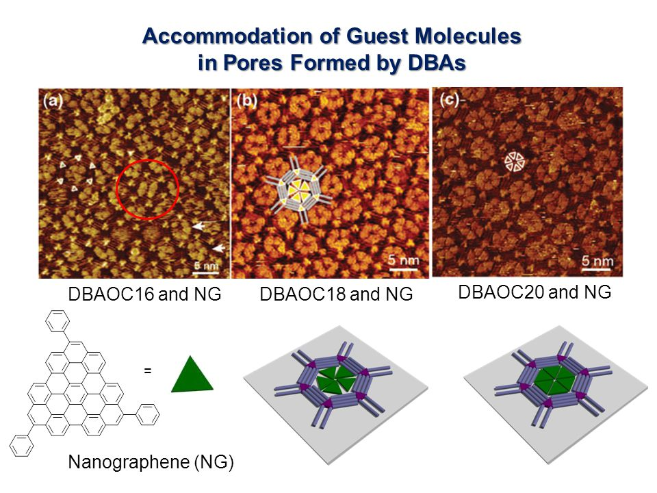 Accommodation of Guest Molecules in Pores Formed by DBAs = DBAOC16 and NGDBAOC18 and NG DBAOC20 and NG Nanographene (NG)